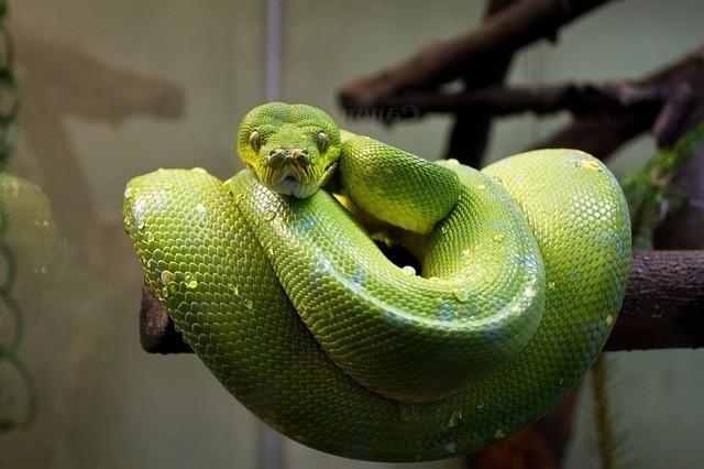 Długi ogon - przykłady. Przykad pozycjonowania słów z długiego ogona. Na zdjęciu wąż.